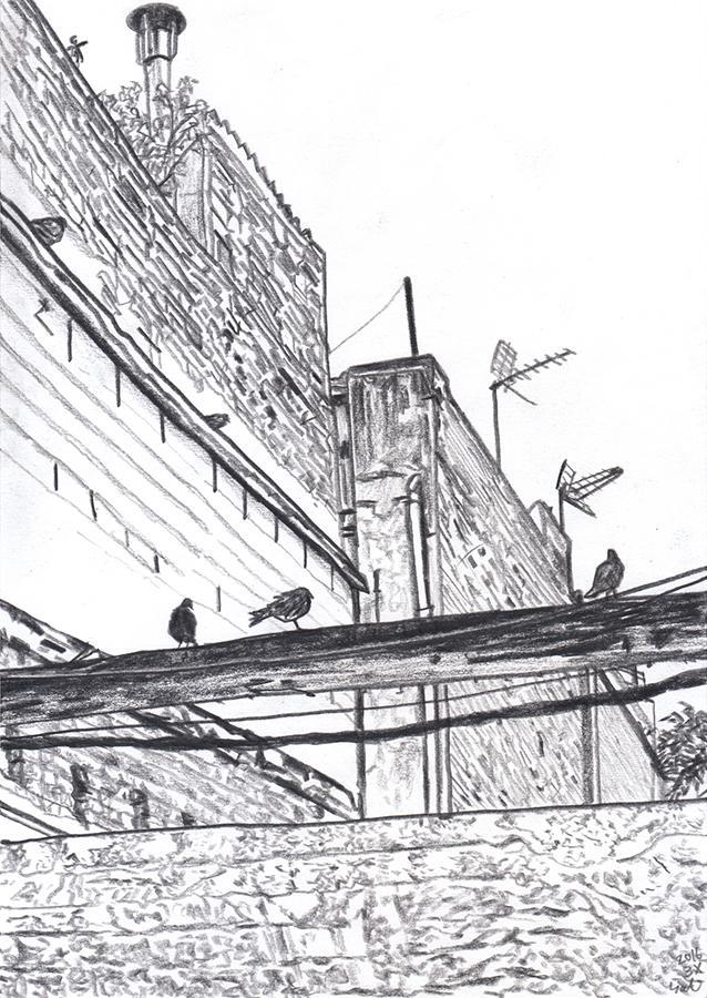 dibujo de palomas en Carrer de l'Argentera de Vallcarca de Barcelona