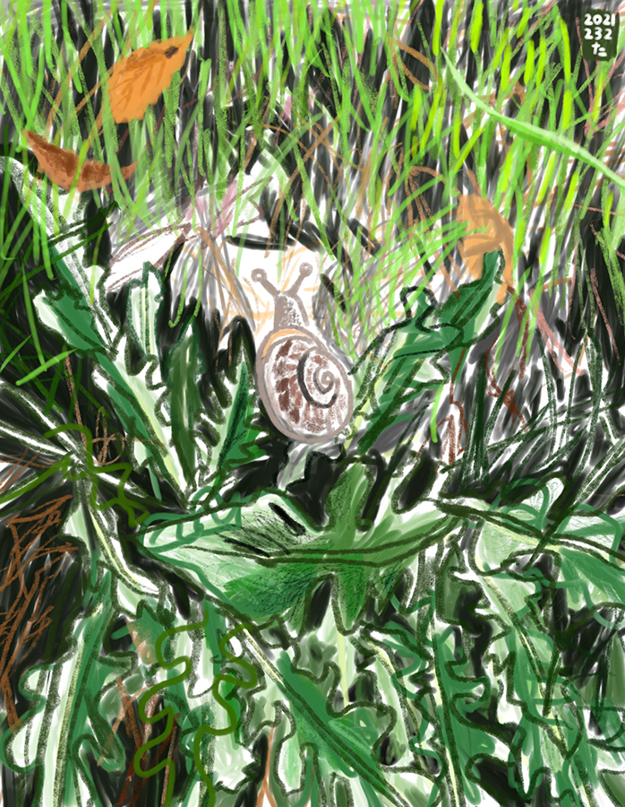 Drawing of snail walking among the leaves