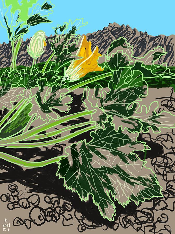 dibujo de calabacín en un campo con vistas al Montserrat