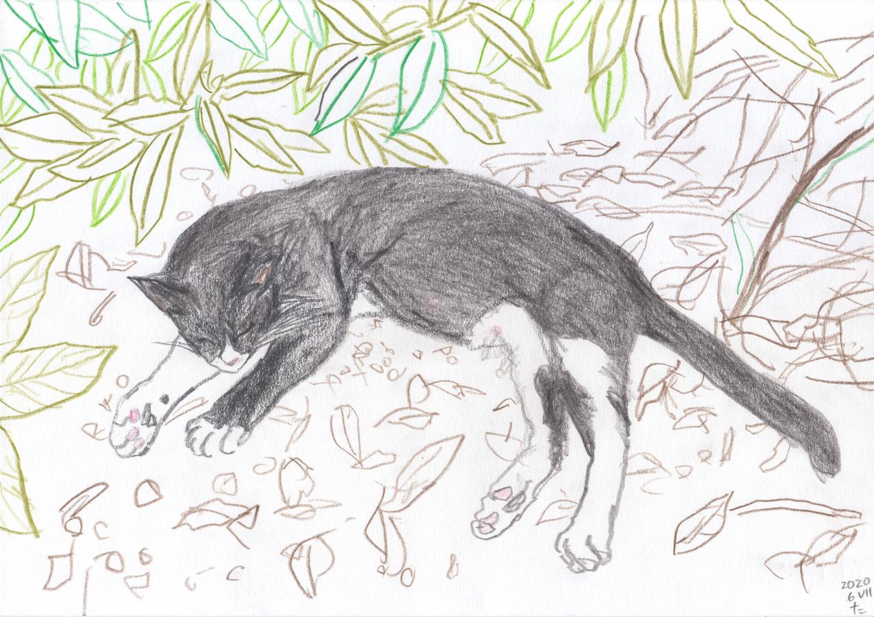 Dibujo de gata blanco y negro Ushiko durmiendo en jardín