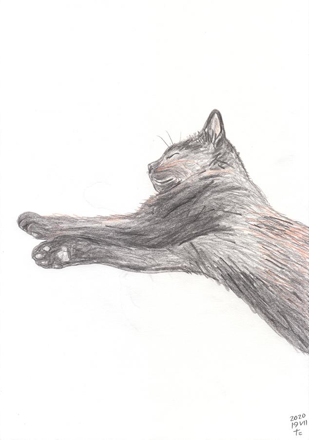 Dibuix de gat negre Gigi dormint