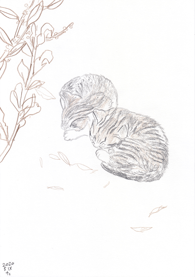 Drawing of twins kittens