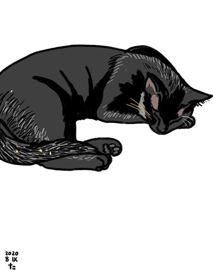 Ilustración de gato negro Gigi durmiendo