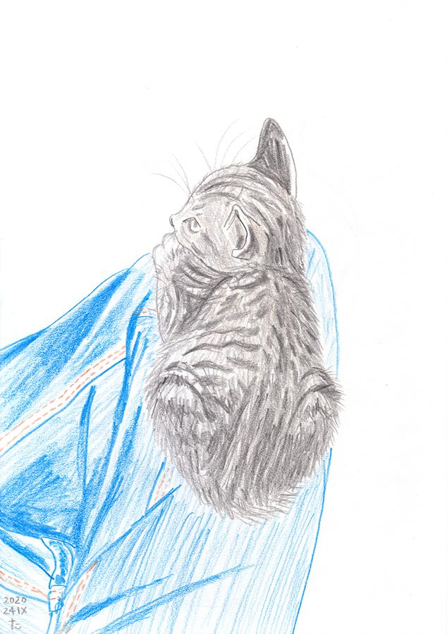 Ilustración de gatito pequeño Chairo