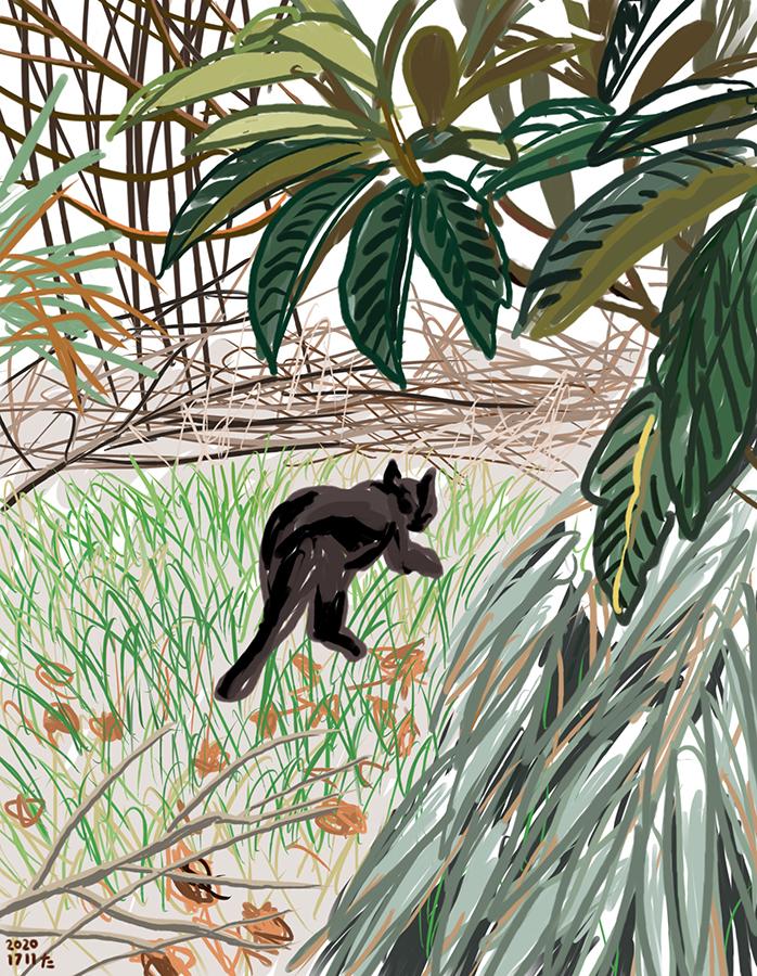 Ilustración dibujo de gato negro Gigi entrando en el bosquecito