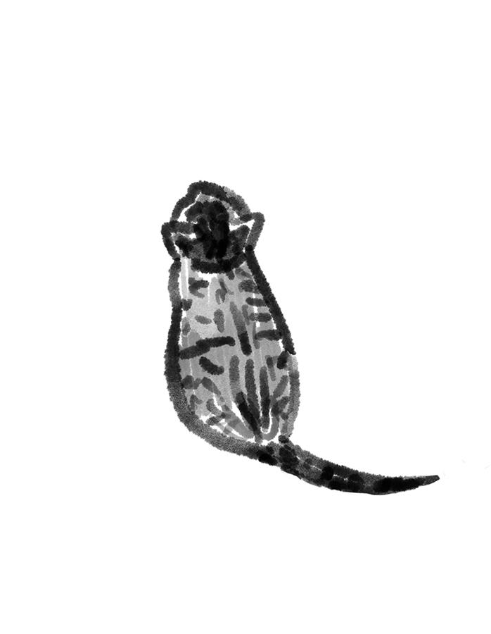 Il·lustració de gat petit mirant cap amunt