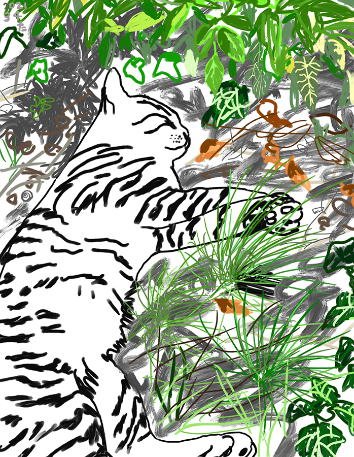 木陰で寝る猫のチャイロの絵