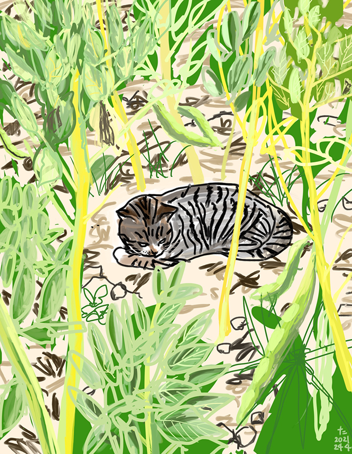 A drawing of a cat Chairo resting in a broad bean field