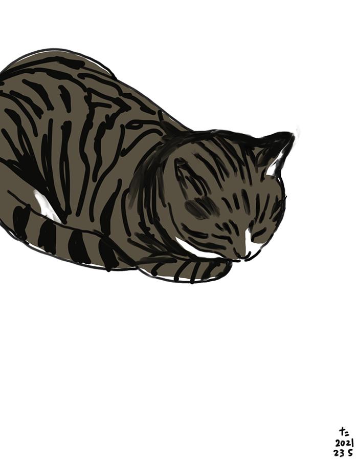 dibujo de gato Chairo dormiendo